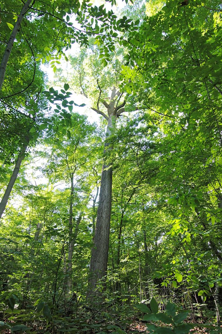 Niagara Glen 05 Apollo of the Forest