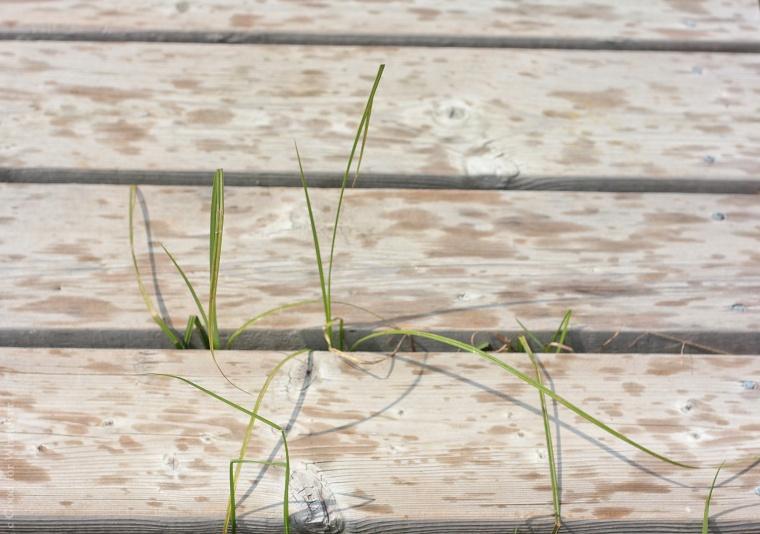 carden-alvar-rain