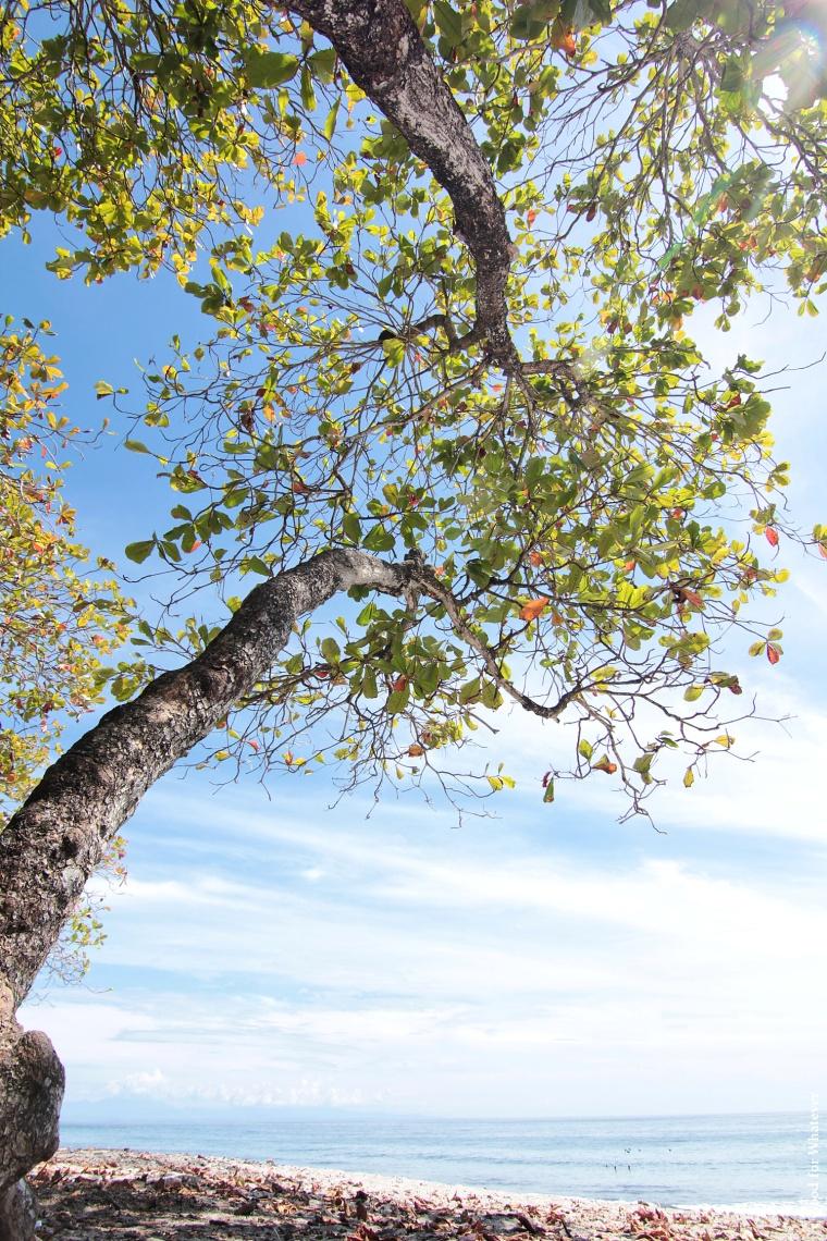 montezuma-beach-trees
