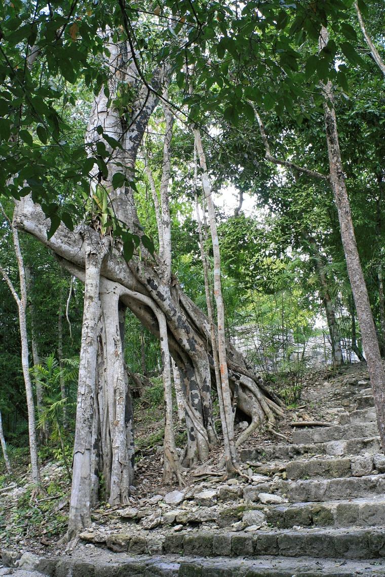 calakmul-hill