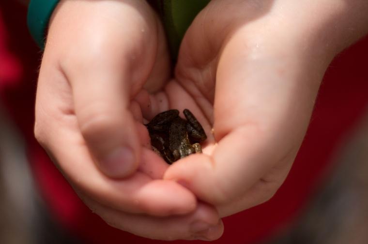 Kids Frog