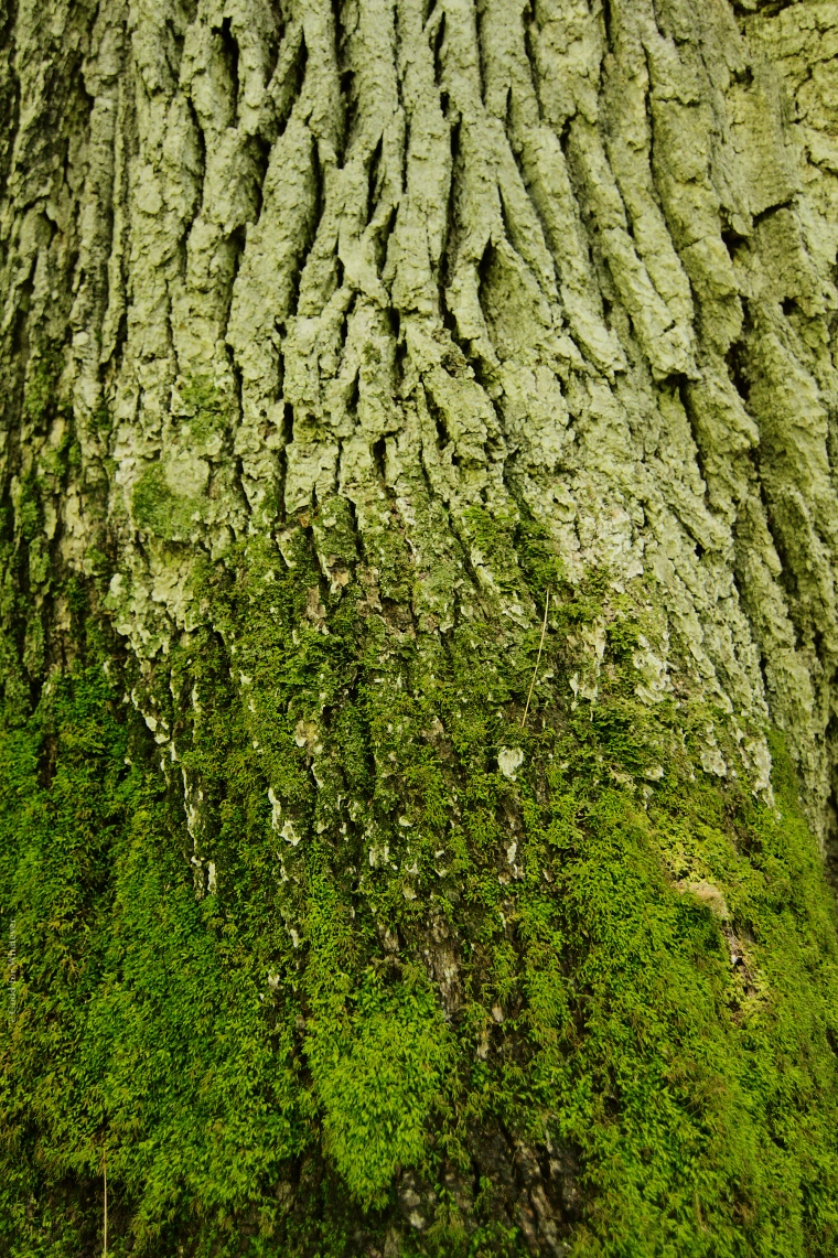 Peters Woods Bark