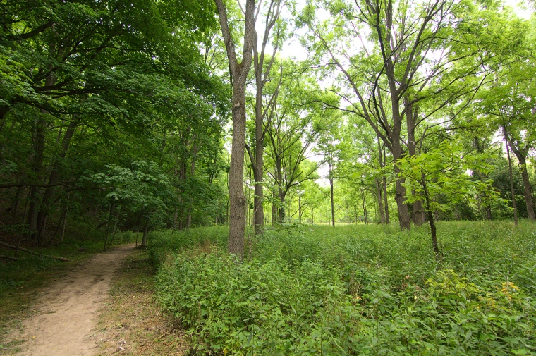 Short Hills Black Walnut Forest