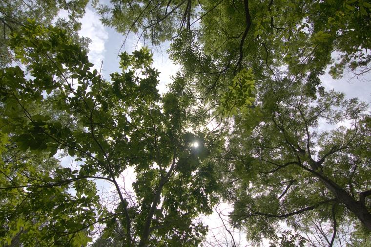 Short Hills Canopy
