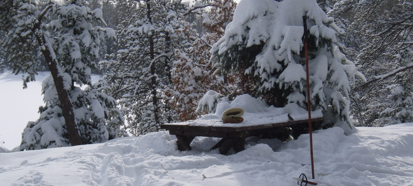 Evergreen Forests:  Part Two of Good for Whatever's Guide to Enjoying Winter